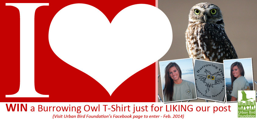 I Love Burrowing Owls T-Shirt Contest