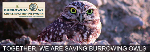 Urban Bird Foundation protects burrowing owls