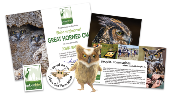 Great Horned Owl Adoption