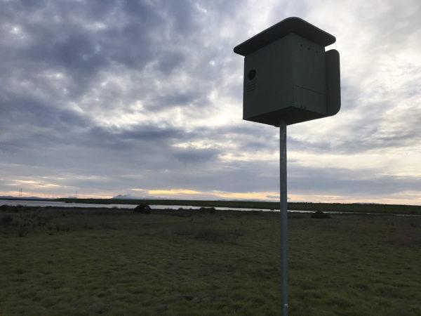 Urban Bird Foundation owl box