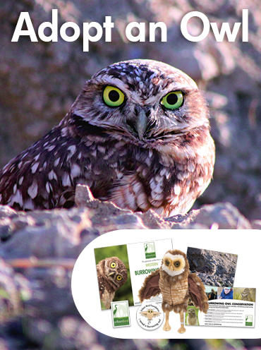 Adopt an owl from Urban Bird Foundation